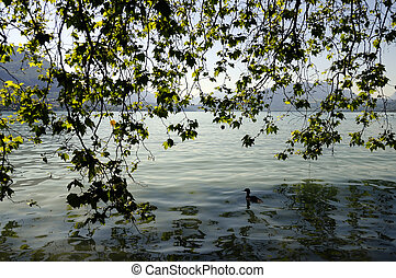 Foliage and lake background in Annecy lake, France