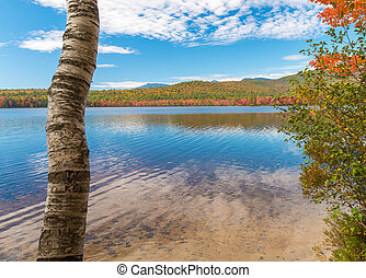 Foliage colors and vegetation near a river