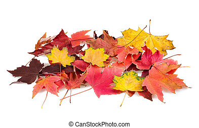 Foliage - dry leaves pile isolated on white