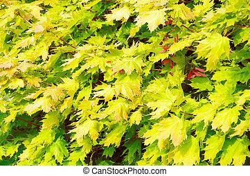 foliage, fundo