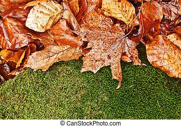 foliage, fundo, molhados