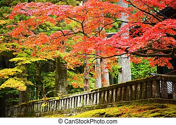 Foliage in Nikko - Autumn foliage in Nikko, Japan.