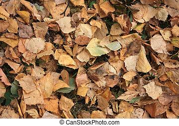 Foliage in the autumn