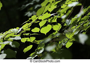 Foliage in the sunlight