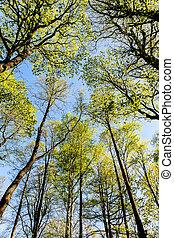 foliage of deciduous trees