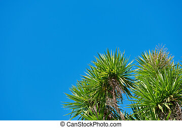 Foliage of trees against a bright blue sky