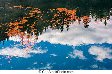 foliage on the water reflecting forest and cloud - beautiful...