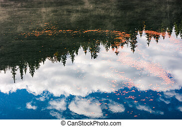 foliage on the water reflecting forest and sky - beautiful...