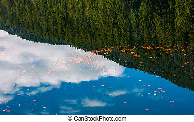 foliage on the water reflecting spruce forest - beautiful...