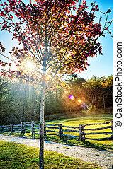 foliage outono, ligado, avenida cume azul, perto, pedra, montanha, carolina norte