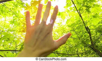 Foliage through the rays of  sun