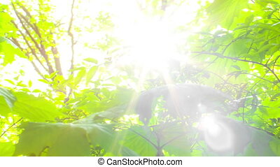 Foliage through the rays of  sun