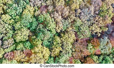 Foliage tree forest in autumn, drone view from above.