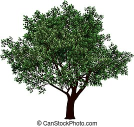Tree in florescence. Eps8. CMYK. Gradients free