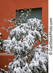 foliage tree under snow in front of the window