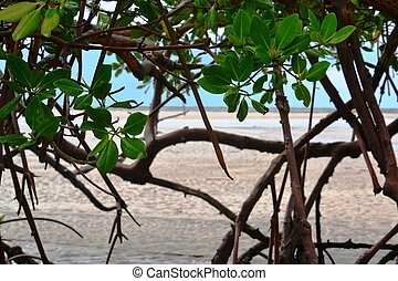 foliage with sea in the background