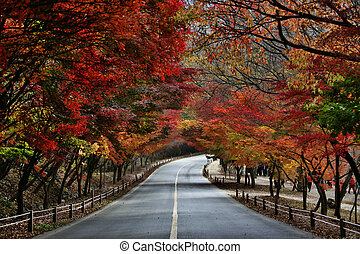 follaje, camino, otoño