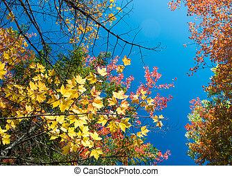follaje, colores, debajo, un, cielo azul