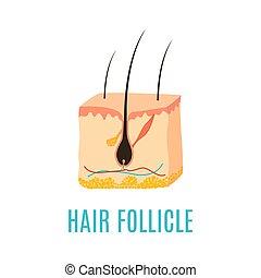 follicule cheveux, icône