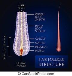 follicule cheveux, structure