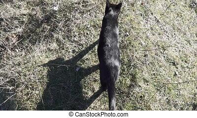 Following black cat in winter - top view of black cat...