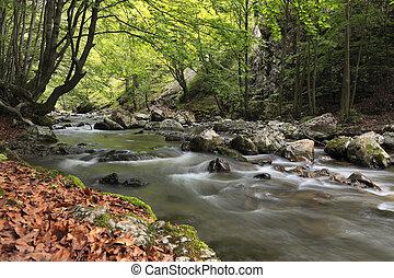folyó, alatt, a, erdő