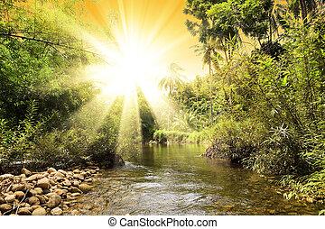 folyó, alatt, dzsungel, thaiföld