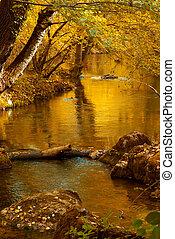 folyó, alatt, mély, ősz erdő