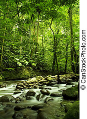folyó, zöld erdő