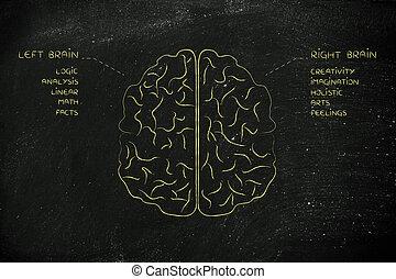 fonction, cerveau, droit, descriptions, gauche