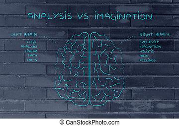 fonction, droit, cerveau, descriptions, analyse, imagination, vs, gauche