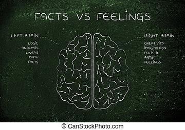 fonction, droit, descriptions, sentiments, cerveau, vs, faits, gauche