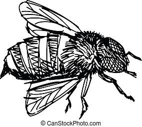 fonctionnement, abeille