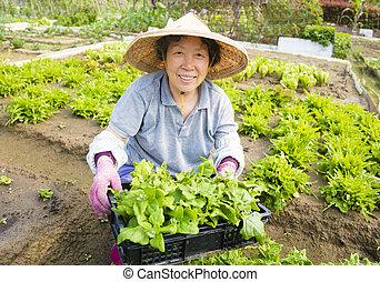 fonctionnement, ferme, légumes, femme, paysan, personne agee, heureux