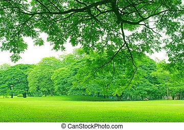 fond, à, arbres verts, dans parc