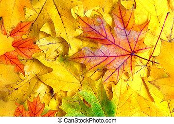 fond, à, feuilles automne