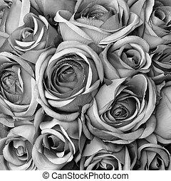 fond, à, roses, dans, noir blanc