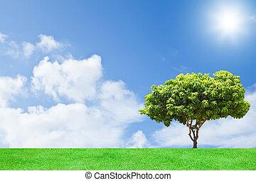 fond, arbre, mangue