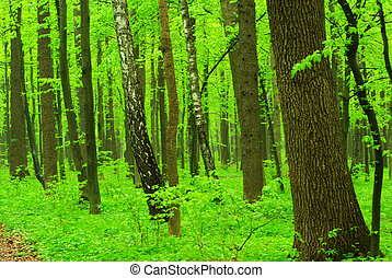 fond, arbres verts
