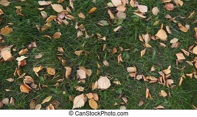 fond, automne, jaune, herbe, feuilles, forest., vert