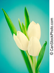 fond, beau, tulipes, bleu, trois, blanc