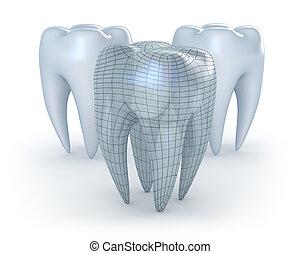 fond blanc, dents