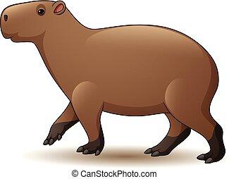 fond blanc, isolé, illustration, capybara