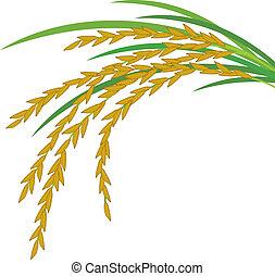 fond blanc, riz, conception