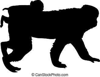 fond blanc, silhouette, macaque, japonaise