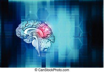 fond, cerveau