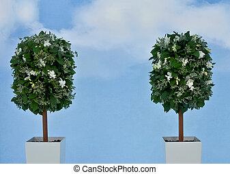 fond, ciel, fleurs blanches, bleu, usines, pot, deux