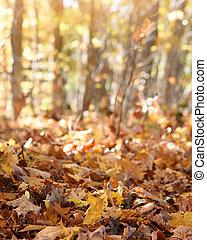 fond, copyspace, feuillage, automne
