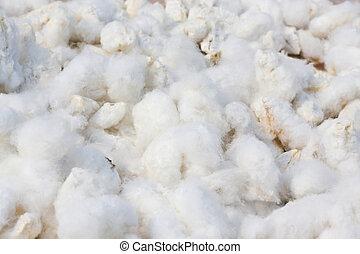fond, coton