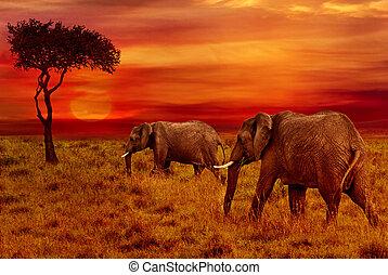 fond, coucher soleil, éléphants